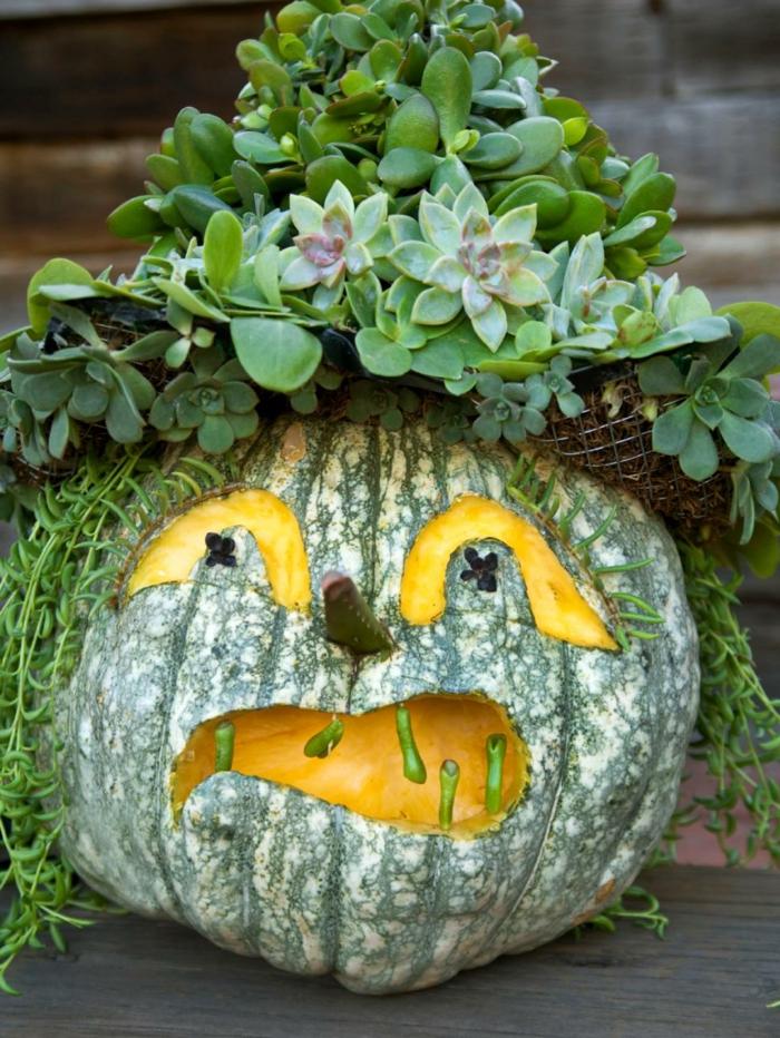 como vaciar una calabaza, calabaza pelada para Halloween con planta