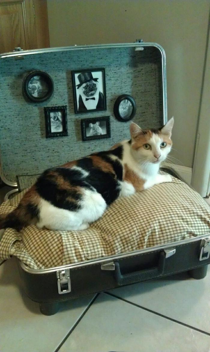 muebles reciclados, camita de gato hcha de maleta reciclada y cojín, fotos en marcos y gato