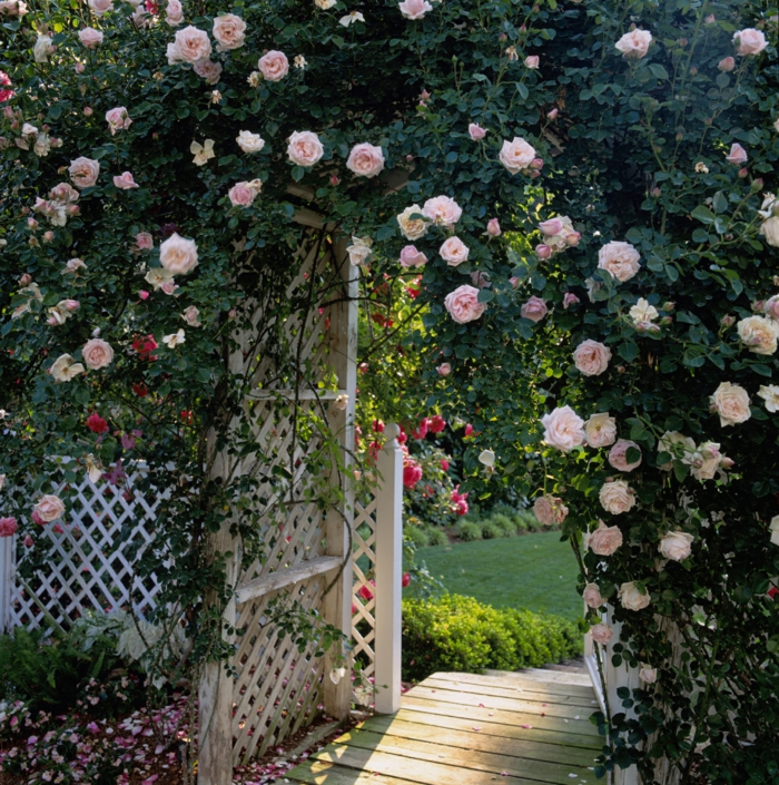 casa y jardin, hermosa bóveda de rosas color rosa, flores trepadoras, cerco de madera blanco en rombos, sendero de madera