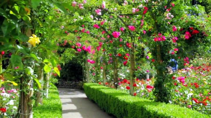 Arbustos de jardin con flores debers with arbustos de jardin con flores best turistas son - Arbustos de jardin ...