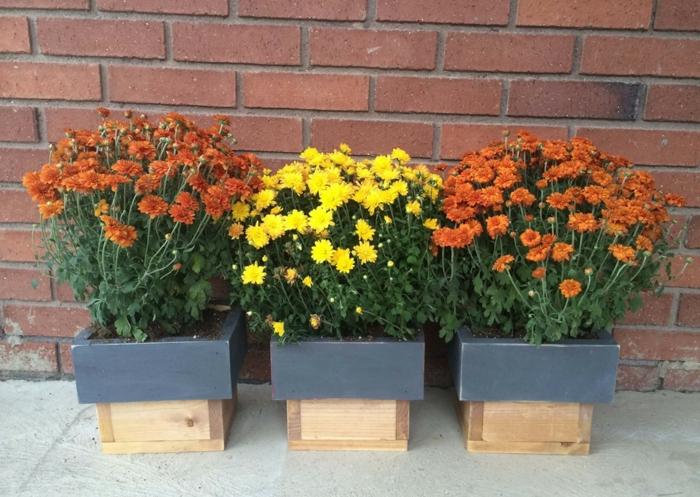 maceteros de madera, jardineras de madera natural y negra, pared de ladrillo, crisantemos amarillos y anaranjados