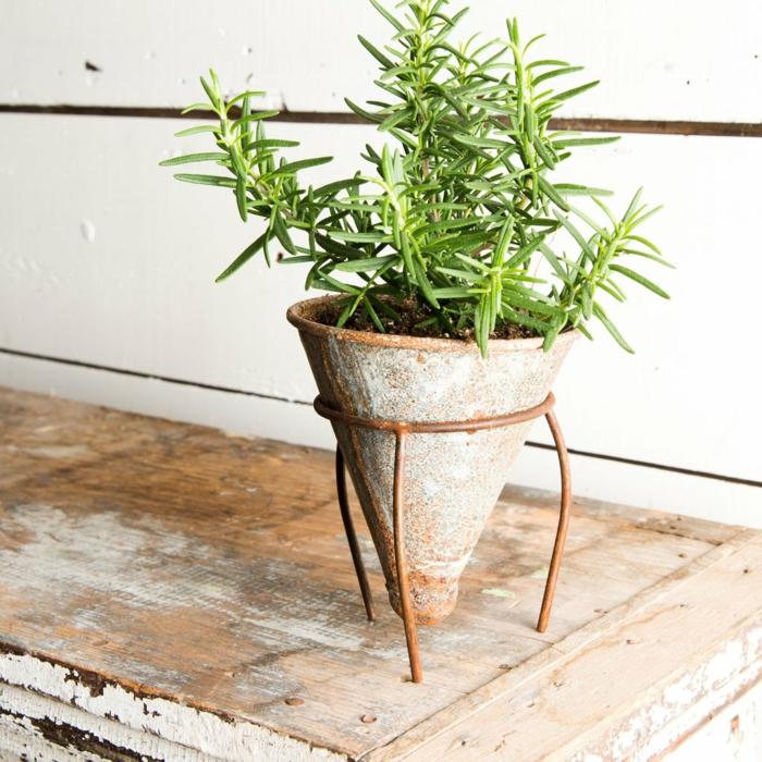 maceteros originales, embudo grande de metal convertido en maceta, aspecto desgastado, planta siempreviva