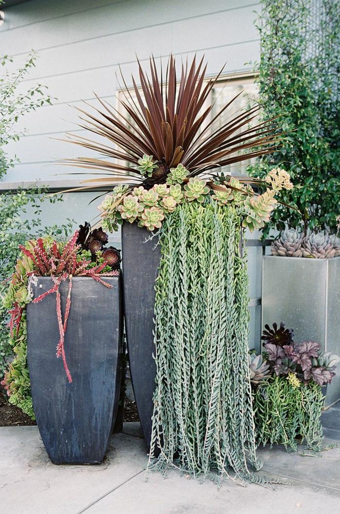 maceteros originales, decoración patio, macetas modernas altas en gris oscuro con siemprevivas y planta trepadora