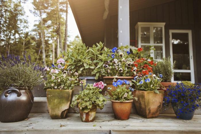 maceteros originales, decoración de patio con diferentes tipos de macetas, geranio, lavanda y petunias