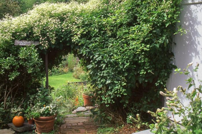 jardines con piedras, grandes plantas enredaderas, decoración de calabaza, jardín con toque salvaje
