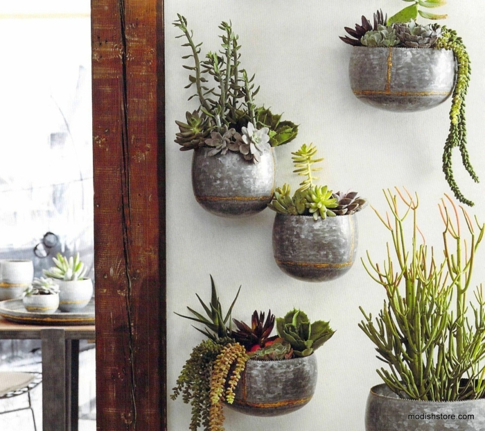 maceteros originales, decoración de interiores con macetas de metal gris en pared, plantas verdes siemprevivas