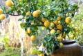 Un jardín con maceteros grandes – decoración y mantenimiento