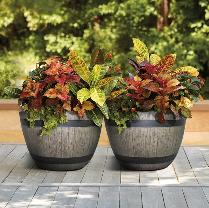 macetas grandes, plantas con hojas de diferente color sin flor, dos macetas de barriles de vino reciclados