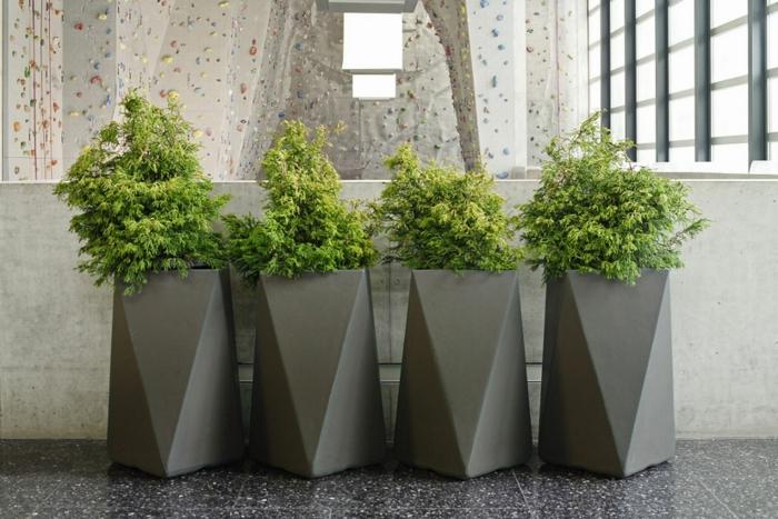 macetas grandes, cuatro macetas altas modernas color gris para decoración de interiores con planta siempreviva verde