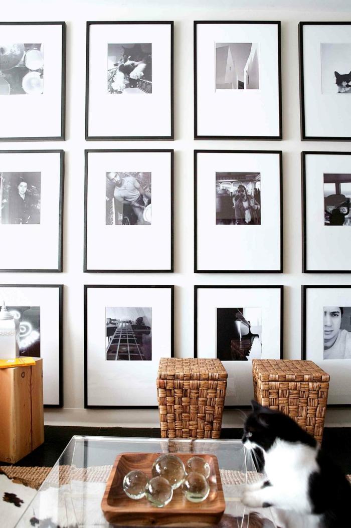 decorar con fotos, pared con muchas fotografías en blanco y negro con marcos delicados en negro, mesa de cristal con un gato