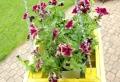 Increíbles ideas sobre maceteros y jardineras con palets hechos a mano