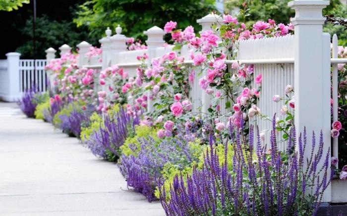 preciosa valle con arbustos de rosas altos, lavanda y plantas verdes, ideas de decoracion de jardines con piedras
