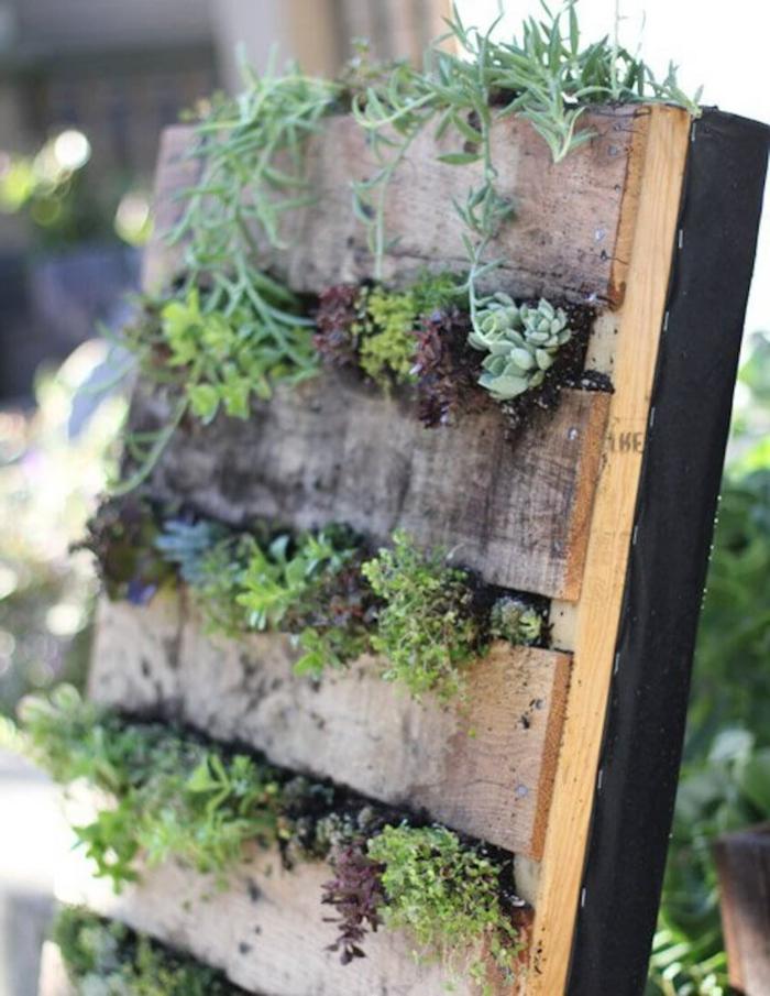 ideas originales para el jardín, jardinera madera DIY con plantas verdes suculentas hecha de palets