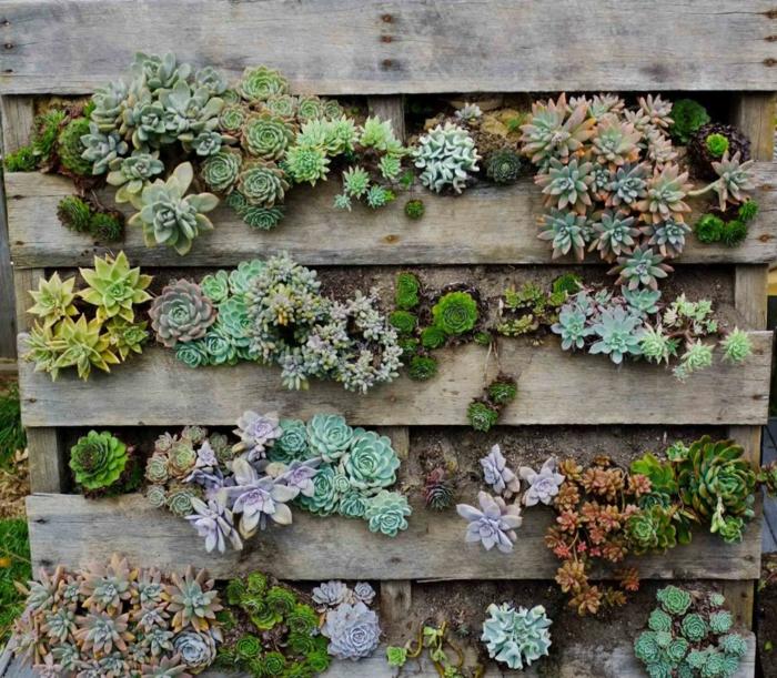 como hacer maceteros de madera vertical con plantas suculentas, pequeñas plantas bajas verdes