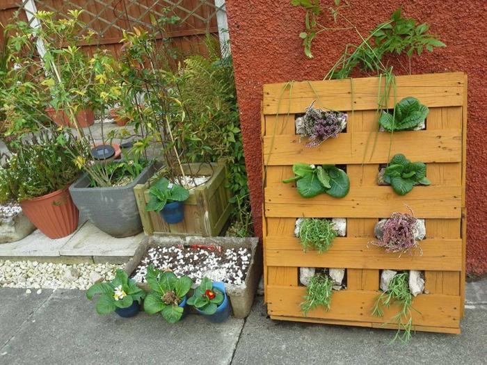 pasos sobre como construir un jardin vertical con palets DIY, palet pintado en color beige, muchas macetas con lechugas