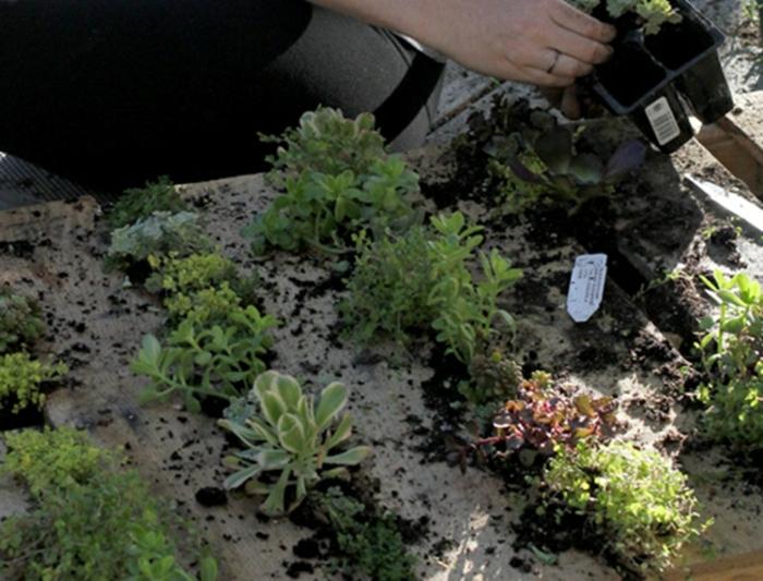 como hacer un macetero DIy hecho de palets paso a paso, tutorial sobre jardin vertical con palets
