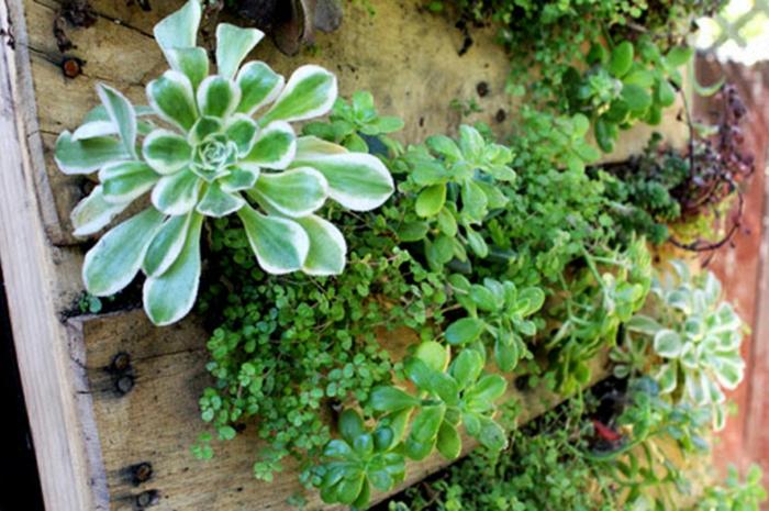 bonitos y prácticos proyectos DIY con materiales reciclados, jardin vertical con palets con plantas suculentas
