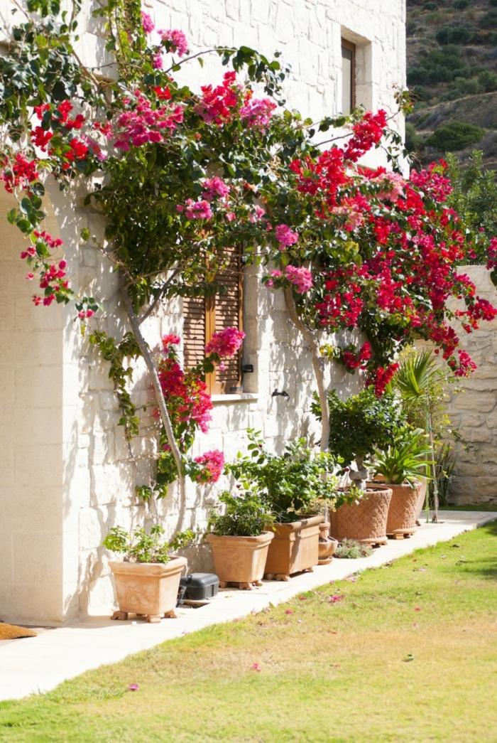 ideas para jardines decorados en estilo mediterráno, arbustos con flores y paredes en blanco