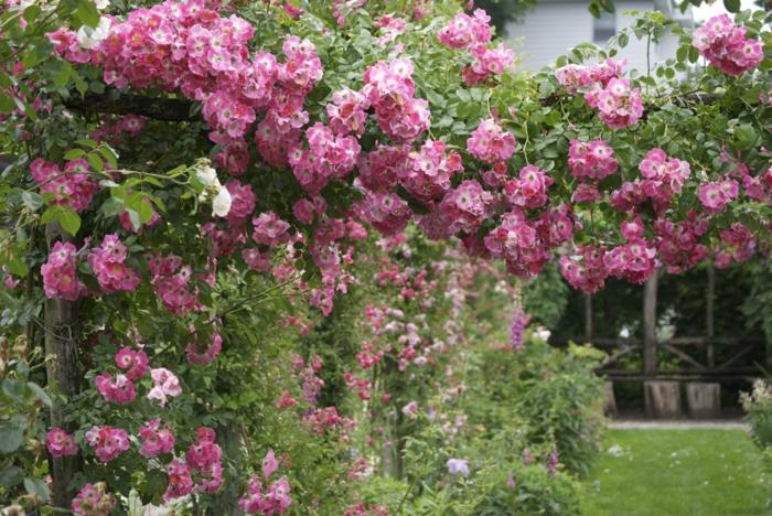 decoracion patios exteriores, decración con hortensias rosas colgantes y otros arbustos