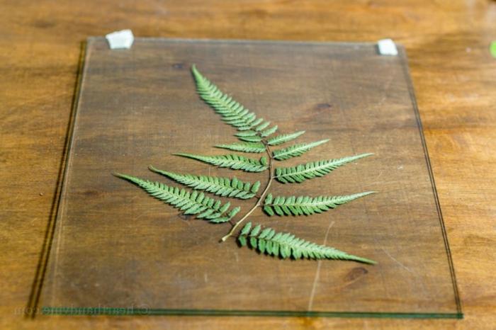 preciosa idea para regalar, cuadro para colgar de cristal con plantas secas, ideas de regalos originales para amigas
