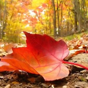 ¡Paisajes de otoño en más de 100 imagenes de ensueño!