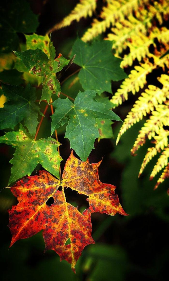 imagenes de paisajes naturales, hojas de arbol de diferentes colores en verde, rojo y amarillo