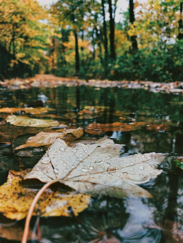 imagenes de paisajes naturales, el lago con las hojas caidas en el, el bosque alrededor