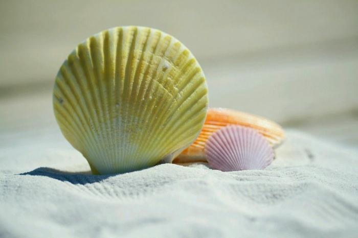 ideas de manualidades para niños faciles y divertidas, pintar conchas marinas para decorar la casa