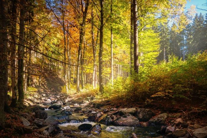 fotos de otoño gratis, bosque de ensueño con el rio atravesandole, piedras en el agua