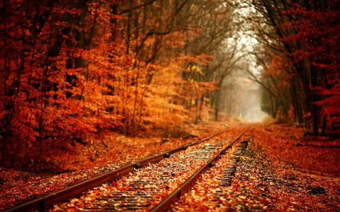 fotos de otoño gratis, en la tranvia del tren atravesando el bosque con hojas caidas al suelo rojas