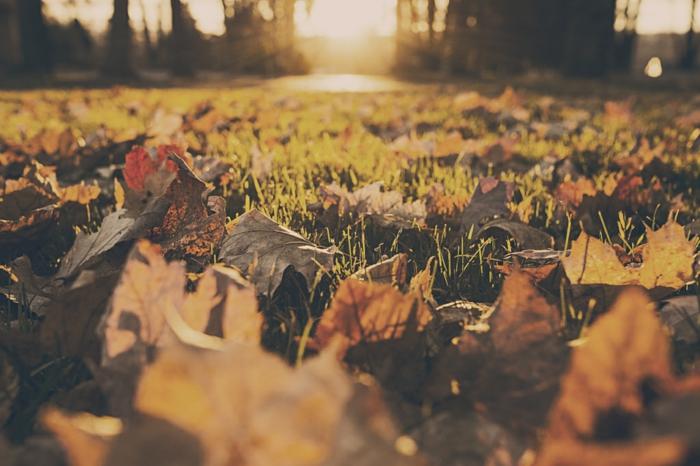 fotos de otoño gratis, hojas secas de otoño en el césped con el fondo del sol brillando y los arboles alrededor
