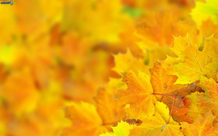 fotos de otoño gratis, hojas amarillas con fondo borroso y hojas enfocadas enfrente