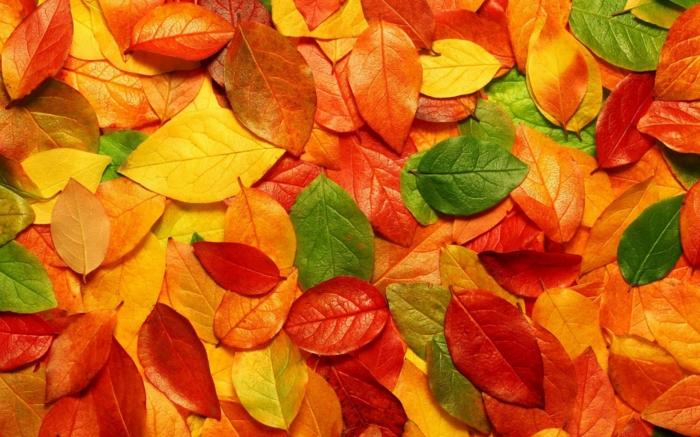 fotos de otoño gratis, hojas de color verde, amarillo, naranja y rojo esparcidas por el suelo