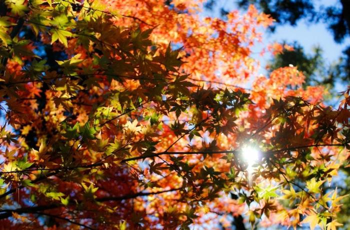fotos de otoño gratis, arbol de otoño con hojas de diferentes colores con el cielo de fondo y el sol