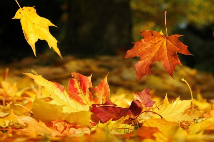 fotos de otoño gratis, con las hojas de diferentes colores esparcidas por el suelo del bosque