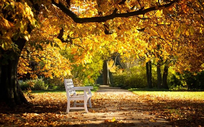 imagenes de otoño, banco blanco en medio del parque con lo arboles encima de el y las hojas esparcidas