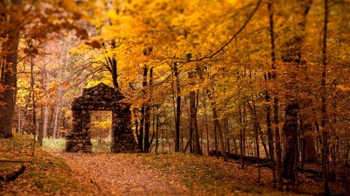 imagenes de otoño, suelo lleno de hojas de otoño de diferentes colores, y muro de piedras