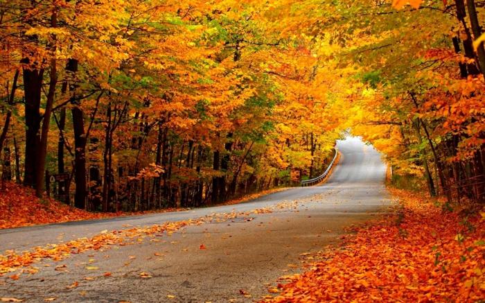 imagenes de otoño, carretera con hojas esparcidas por el suelo de diferentes colores, arboles alrededor