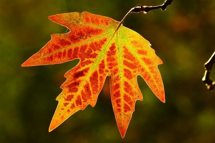 imagenes de otoño, hoja de color rojo colgando de la rama de color rojo, amarillo y naranja