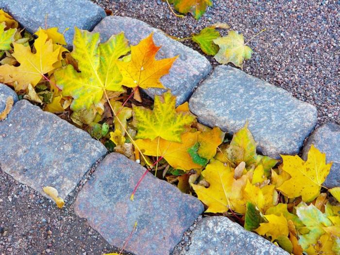 imagenes de otoño, hojas amarillas esparcidas por el suelo lleno de arena y piedras grandes