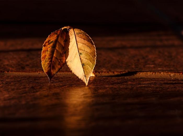 imagenes de otoño, os hojas en una superficie de madera con la luz cayendo sobre ellas
