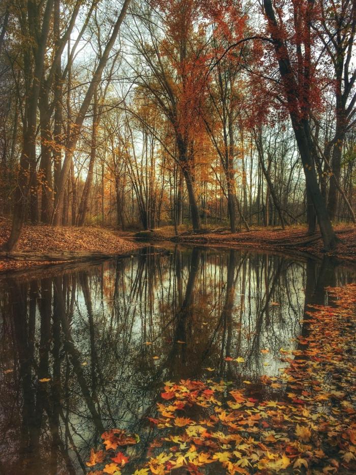imagenes de otoño, agua del rio con hojas de otoño esparcidas por el suelo y arboles alrededor