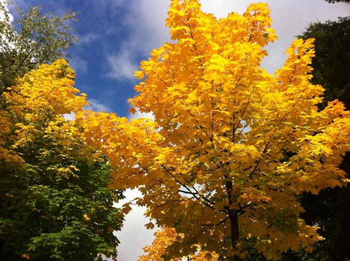 imagenes de paisajes naturales, arboles de hojas amarillas y verde con el cielo viendose al fondo