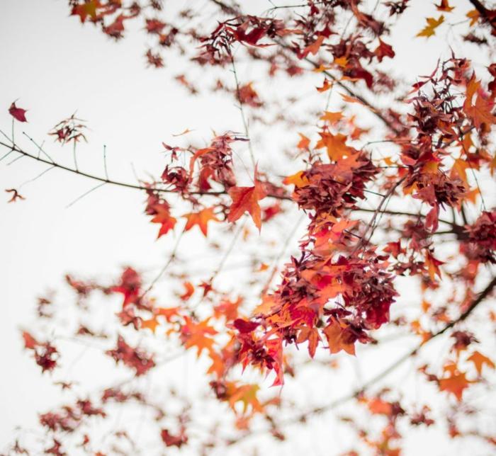 imagenes de paisajes naturales, arbol con hojas otoñales de diferentes colores en el fondo blanco