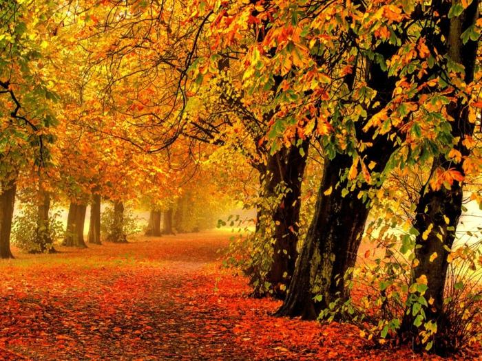 imagenes de paisajes naturales, suelo lleno de hojas rojas con los arboles alrededor rodeando el camino