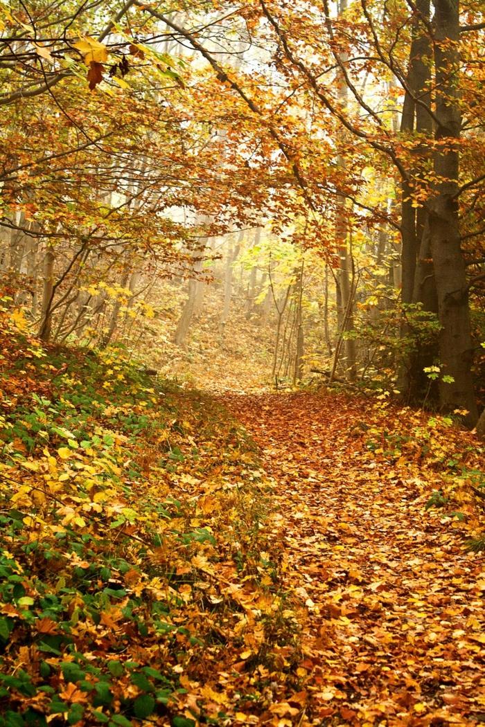 imagenes de paisajes naturales, hojas secas de otoño en el camino hacia el bosque con luz al fondo