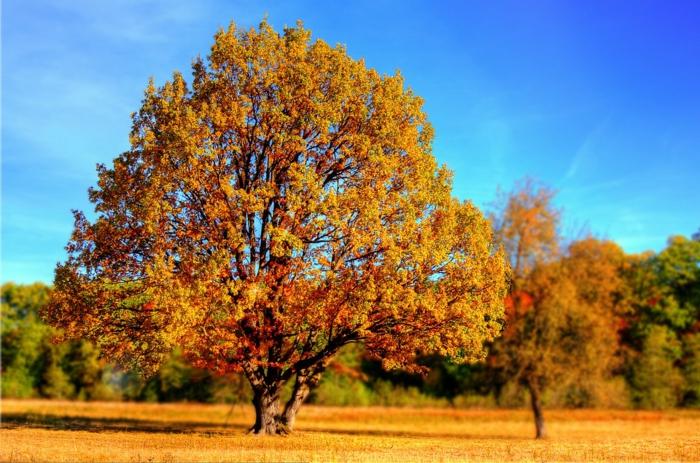 imagenes de paisajes naturales con el suelo de la hierva de otoño, arbol con copa otoñal de diferentes colores