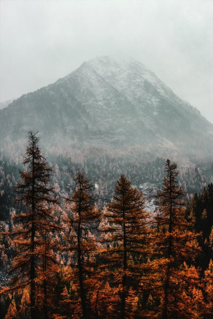 imagenes de paisajes naturales, montaña en el fondo con el pico lleno de nieve y pinos altos