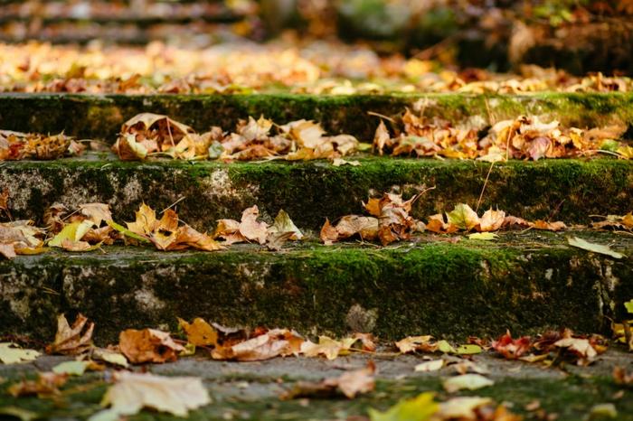 imagenes de paisajes naturales, escaleras llenas de hojas secas de otoño, bonita imagen