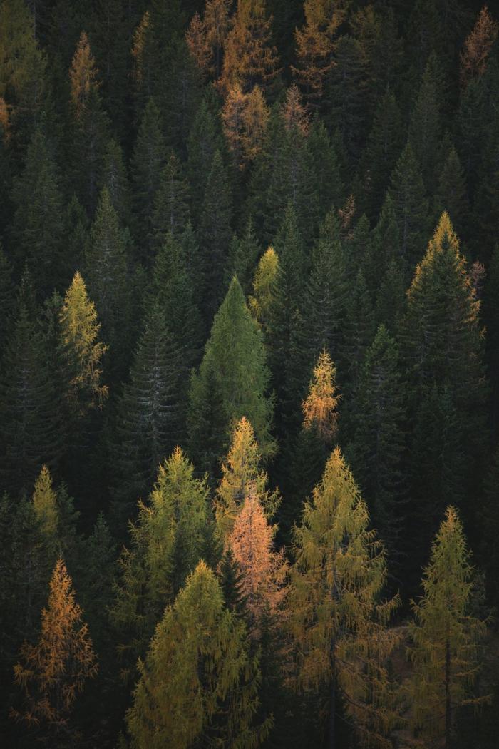 imagenes de paisajes naturales, pinos verdes en el bosque con ramas de diferentes colores